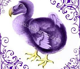 Light violet Dodo by Garden of England