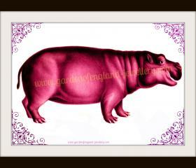 Magenta Hippo by Garden of England